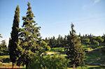 Groene omgeving in het hart van athene nabij de Akropolis