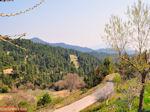 Groene omgeving Osios David bij Rovies   Evia Griekenland   De Griekse Gids